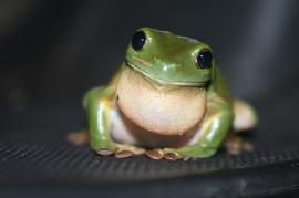 The Frog Blog  Science Blog