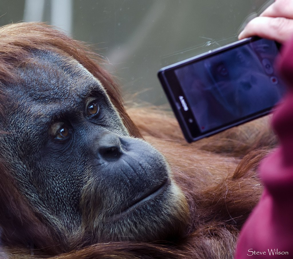 Teaching about Endangered Species – 3 Great Apps for the Classroom