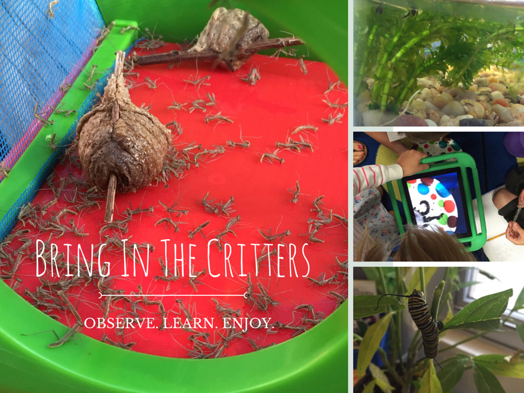 4 Reasons To Bring Nature Into Your Classroom