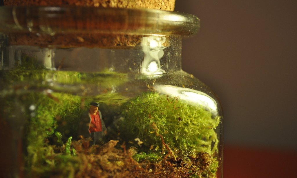 9 Terrarium Kits For Kids: A Fun Way To Bring Nature Indoors