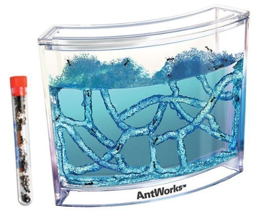 Live-Blue-Gel-Ant-Habitat-with-Live-Ants.jpg