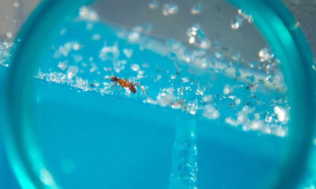 7 of the Best Ant Farm Options for Your Eager Entomologists