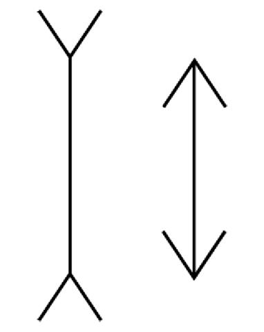 Image of Muller Lyer Optical Illusion