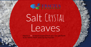 Salt Crystal Leaves – The Ultimate Fall At-Home Science Experiment!